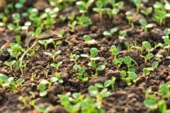 best-techniques-radish-seedlings