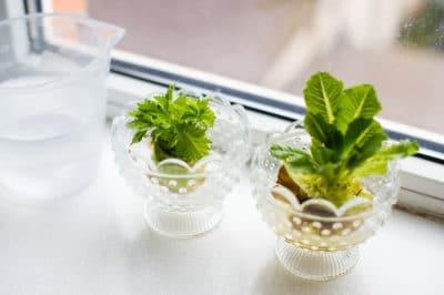 growing-celery-indoors