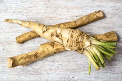 harvesting-techniques-horseradish
