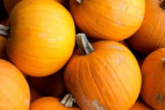 how-long-do-pumpkins-last-off-the-vine