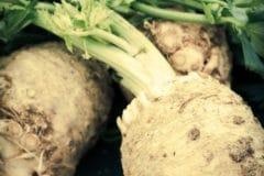 how-to-harvest-horseradish