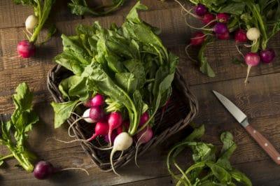 keep-radishes-fresh