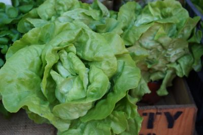 lettuce-turn-red
