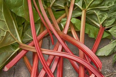 tell-rhubarb-ripe