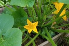 title-can-grow-squash-container