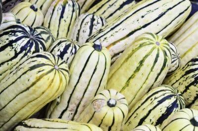 title-fall-harvest-delicata-squash