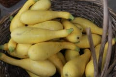 title-growing-crookneck-squash-time-favorite