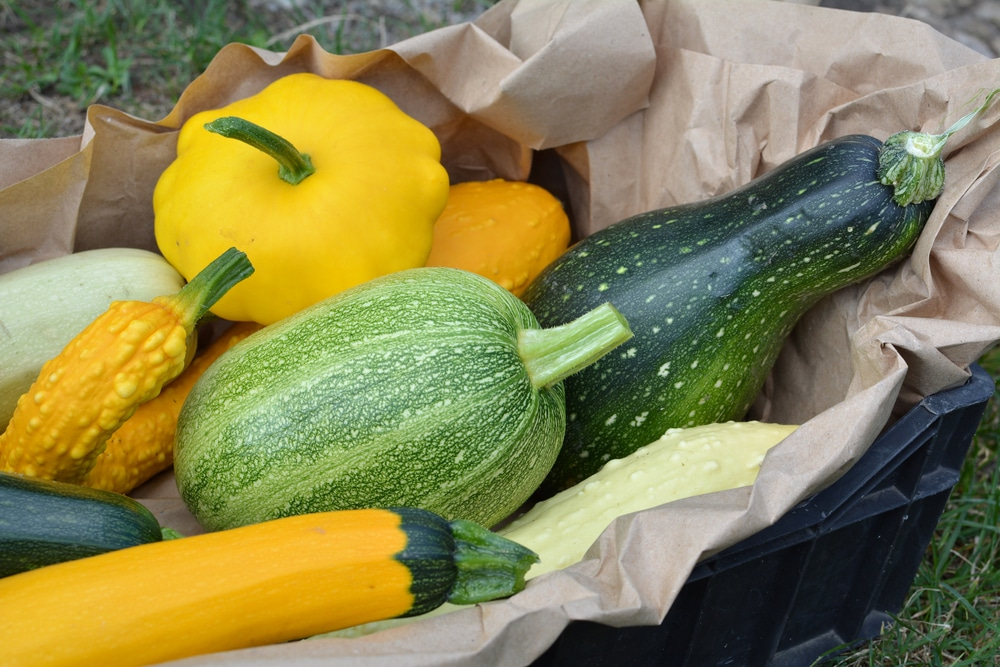 Growing Unique Summer Squash Varieties - Garden.eco