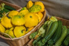 title-short-term-storage-summer-squash