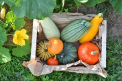 title-squash-grows-better-companion-plants