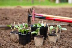 title-thriving-squash-plants-seed