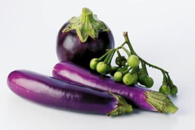 best-eggplant-grow
