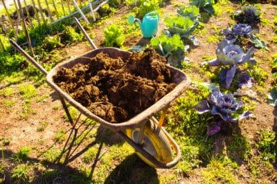cucumber-fertilizer
