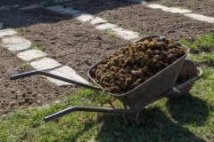 fertilizer-for-pumpkins