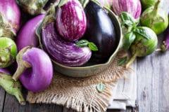 growing-eggplant