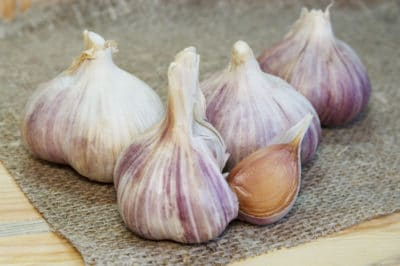 growing-garlic-containers