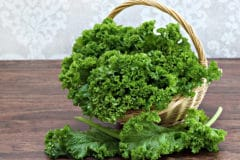 harvesting-kale