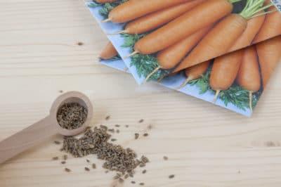 how-do-carrots-reproduce