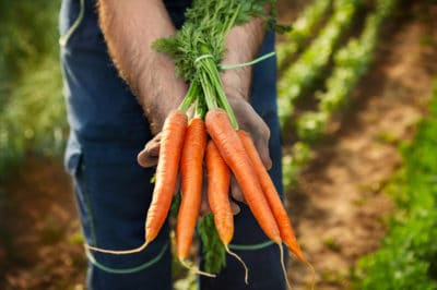 how-long-does-it-take-to-grow-carrots