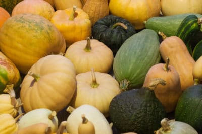 how-to-store-squash