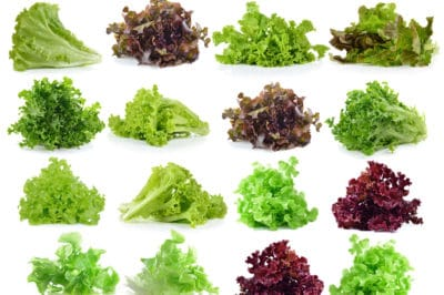 leaf-lettuce-types