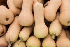 pick-butternut-squash-2