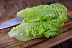regrow-romaine-lettuce