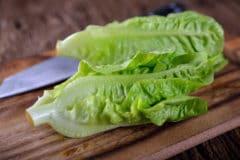 regrow-romaine-lettuce