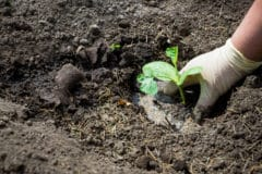 when-to-plant-squash