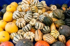 winter-squash-types