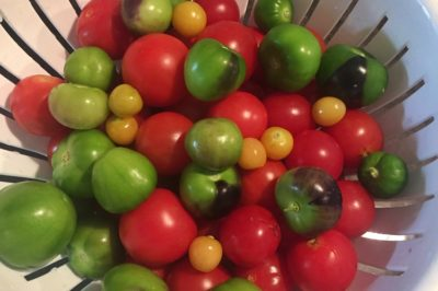 are-tomatillos-tomatoes