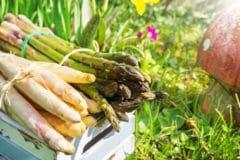 asparagus-companion-plants