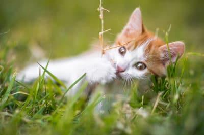 asparagus-fern-cats