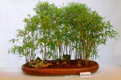 bamboo-house-plant