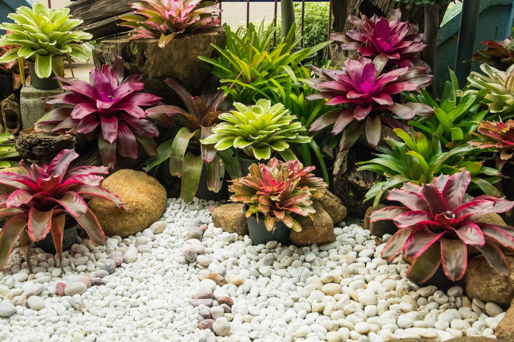 Bromeliad Care Top Tips On Keeping Them Happy