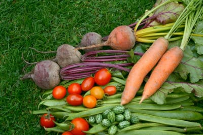 carrot-companion-planting