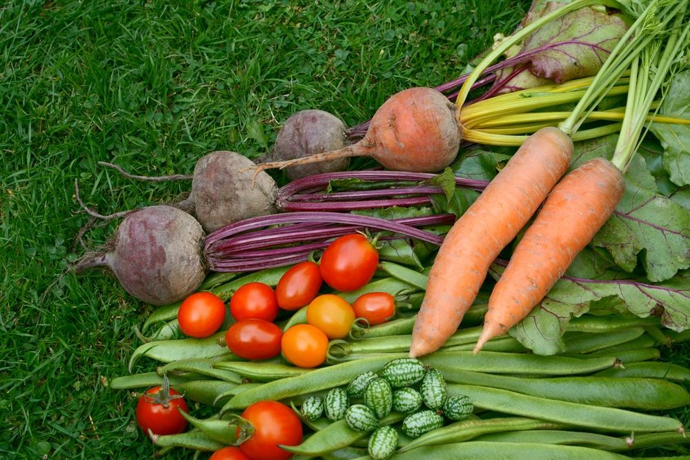 How to Grow Carrot Companion Crops