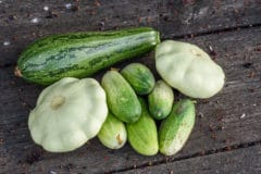 cucumber-family