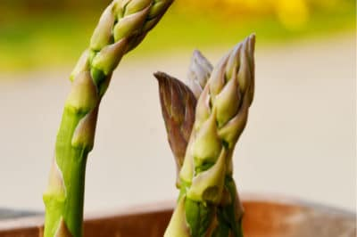 Growing Asparagus In A Container Garden