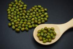 growing-mung-beans