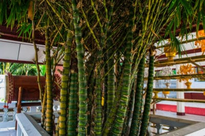 how-to-control-bamboo