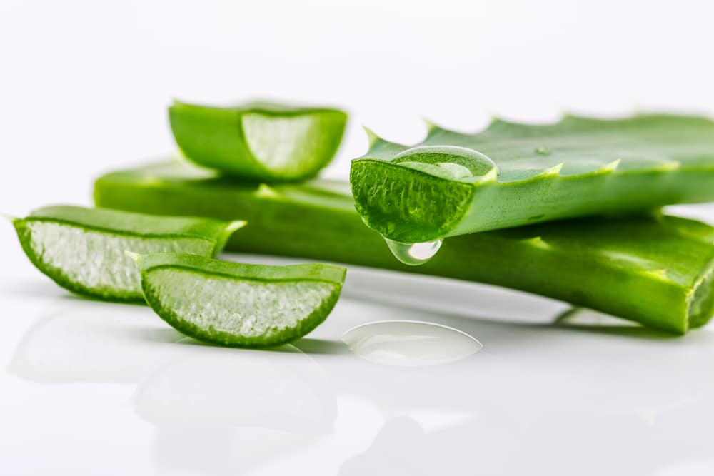 how to cut an aloe vera plant for various needs