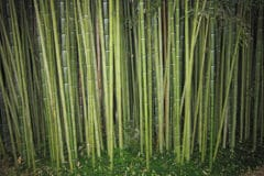 how-to-kill-bamboo