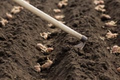 how-to-plant-seed-potatoes