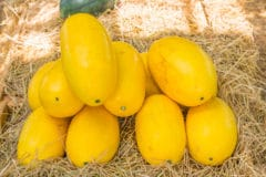 how-to-store-spaghetti-squash