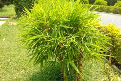 bamboo-backyard