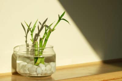 bamboo-in-water