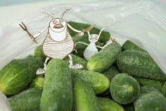 cucumber-problems