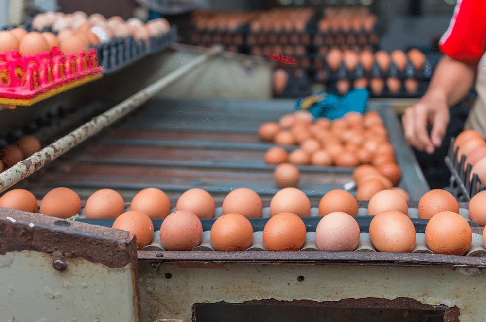 egg-farming