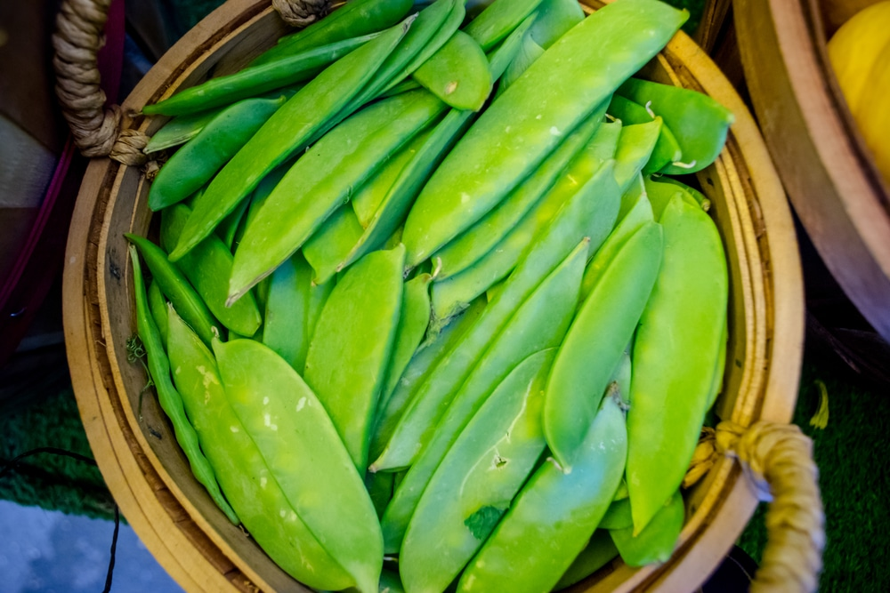 freezing-snow-peas